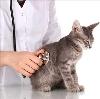 Ветеринарные клиники в Алмазном